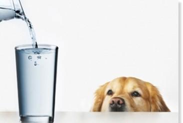 2ae018744370328953a6cc6f918289da--agua-kangen-kangen-water.jpg